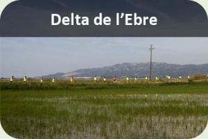 Un dia Delta